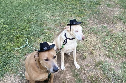 mutts wearing cowboy hats